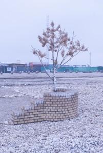 Ett kylslaget  träd som troligen längtar efter vårsolen.  Foto: Försvarsmakten/Carin Bergensten