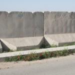 Kontrasten mellan den blommanden vallmon och betongen är markant. Foto: Försvarsmakten/Carin