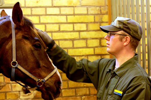 Hästen Signal ryktas