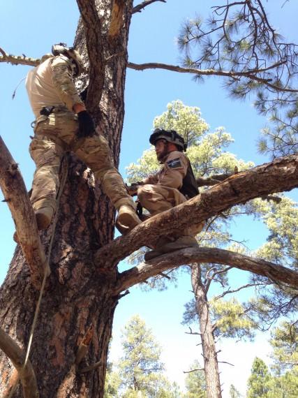 Vertikal räddning i träd