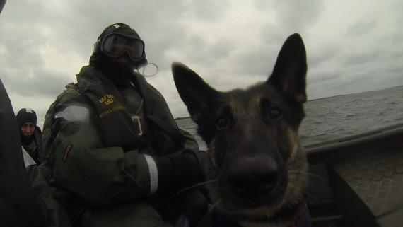 Vindsök med hund från G-båt